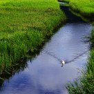 Beihai Wetland