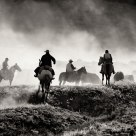 Cattle Drive #8