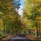 Arboreal Basillica