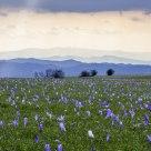 Monte Petrano fiorito