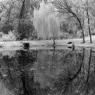 Truman Pond