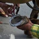 Horse Shoe Repair