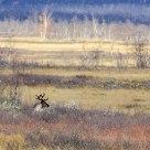 Reindeer near Kiruna
