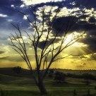 Sunrays Behind Tree