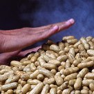 Steamed Peanuts
