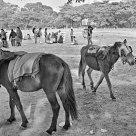 Horse Walkers