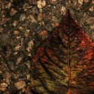 Autumn Leaf on Textured Background