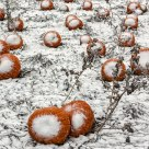 Snowing on the Pumpkin Patch