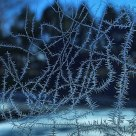 Tangled Up In Frost