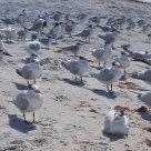 Seabird Convention