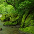 River shades of green