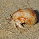 Hermit crab on Thailand beach
