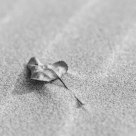Leaf in Sand