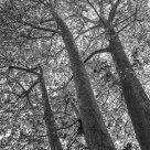L'albero di strada - Street Tree