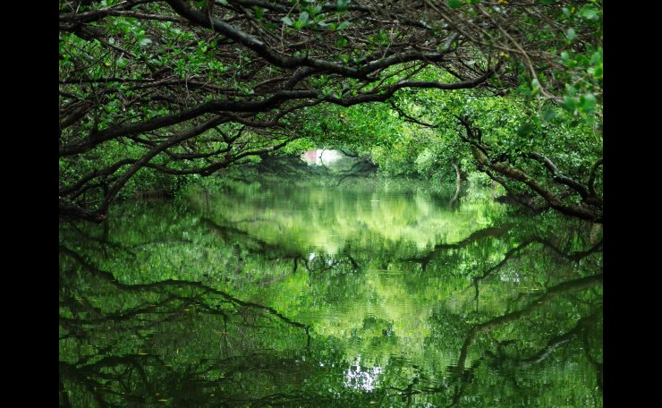 Forest in the water