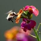 C'è un'ape che se posa...