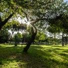 Ombre nel Parco - Park's Shadows