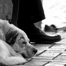 Il piede del cane