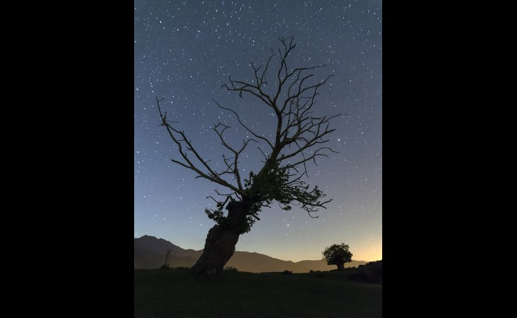 The tree and the stars