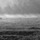 Four Horses panorama