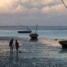 Seashore Silhouettes
