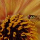Summer Pollen