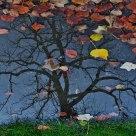 Nuit d'automne (reflets)