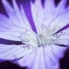Violet-Blue