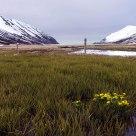 A scene from Hedinsfjordur Iceland