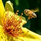 Beesy Work