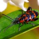 昆虫--Insects