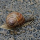 snail with her shell