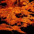 Autumn leaves light-up