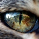 The World Through A Cats Eye