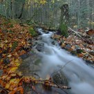 Autumn in the Caucasus forest