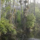 A Pond in the Big Cypress Swamp, Florida