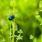 Insettone / Big bug