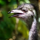 Emu in the shadows