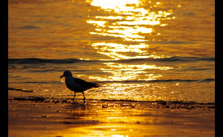 Seagull & Sunset
