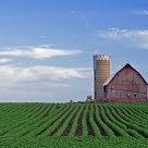 Minnesota Farm Scene 2015