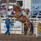 Saddle Bronc Riding @ County Fair Rodeo