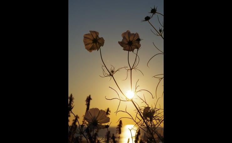 Morning Flower Sun