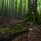 Aspromonte forest