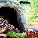 Home's Pet