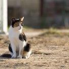 Horse farm cat