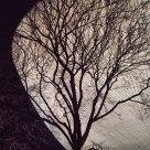 Tree/Egg