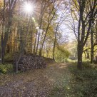 Autumn wood pile