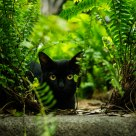 black cat in the green