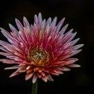 beautiful flower in its full glory