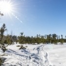 Sunny day in a pine forest